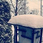 大雪です~_~;